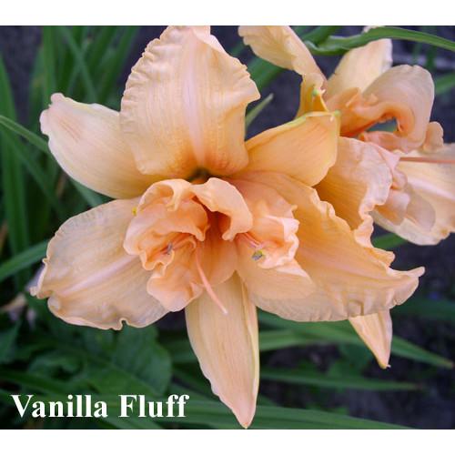 Vanilla Fluff